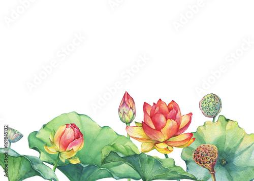 Wall Murals Border Poster Of Pink Lotus Flower With Leaves Seed